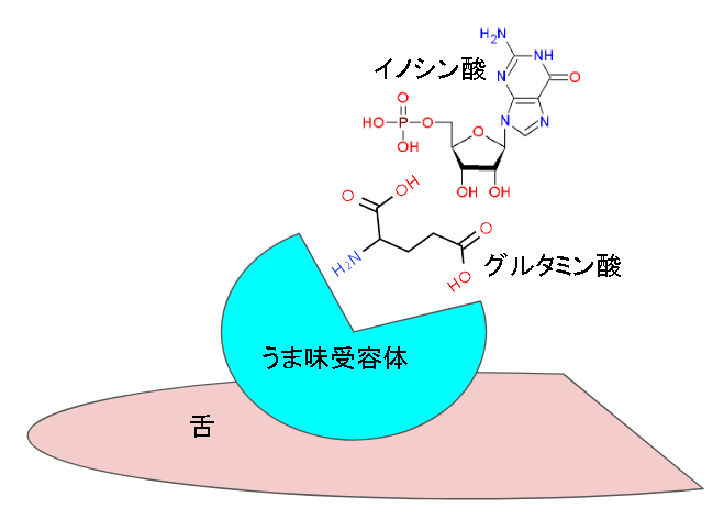 効果 グルタミン酸 昆布に多く含まれるグルタミン酸とは?摂取して得られる3つの効果